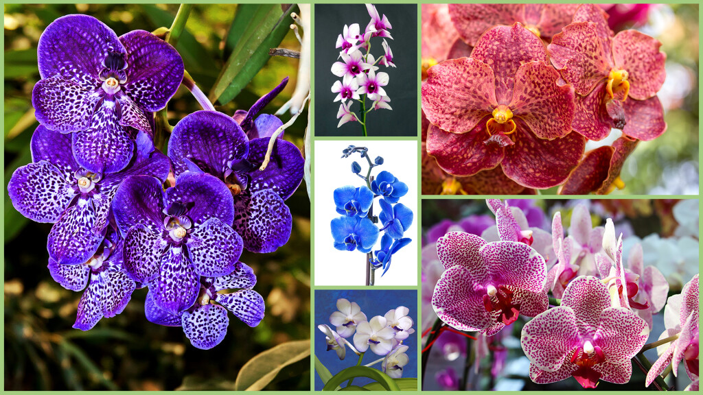 Orchidee in Mostra 2020 (8-29 Febbraio) - Orchidee in mostra 2020